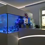 Rezeption und Riffwasseraquarium
